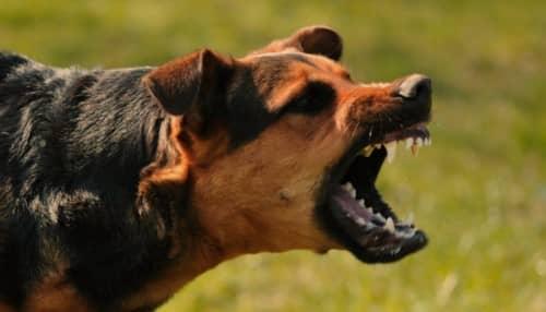 การติดเชื้อจากสุนัขกัด (Dog bite) : อาการ สาเหตุ การรักษา