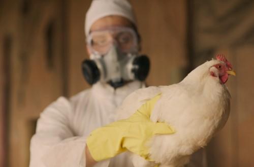 โรคไข้หวัดนก
