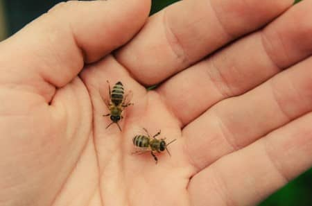 Bee Sting Allergies