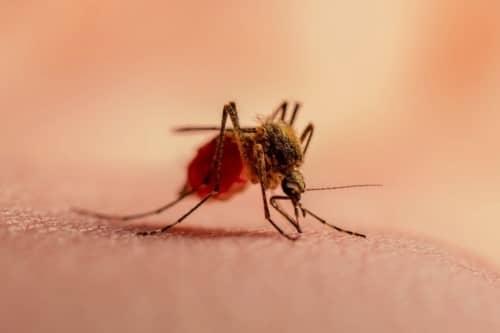 โรคไข้มาลาเรีย (Malaria) : อาการ สาเหตุ วิธีการรักษา