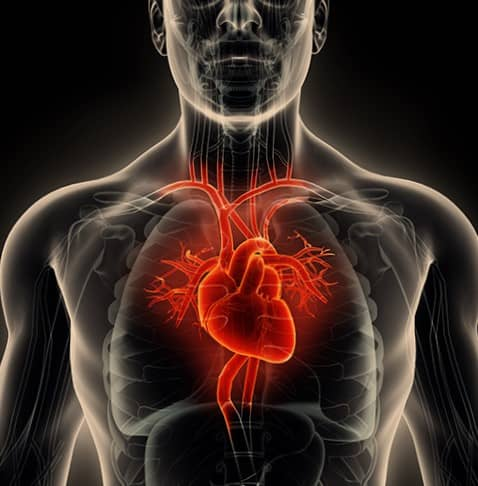 ภาวะหัวใจล้มเหลว (Heart Failure) : อาการ สาเหตุ การรักษา