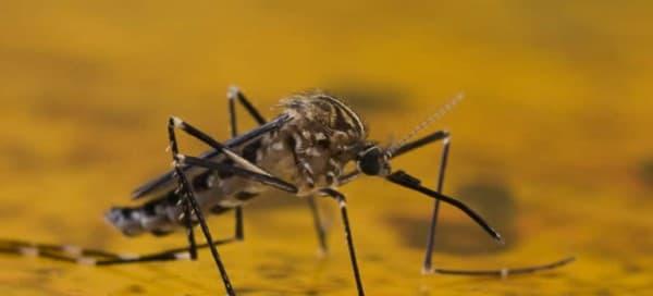 ไข้เหลือง (Yellow fever) : อาการ สาเหตุ การรักษา