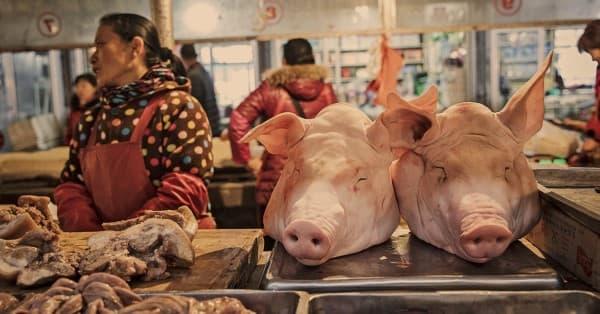 ไข้หวัดหมู (Swine Flu) : อาการ สาเหตุ การรักษา